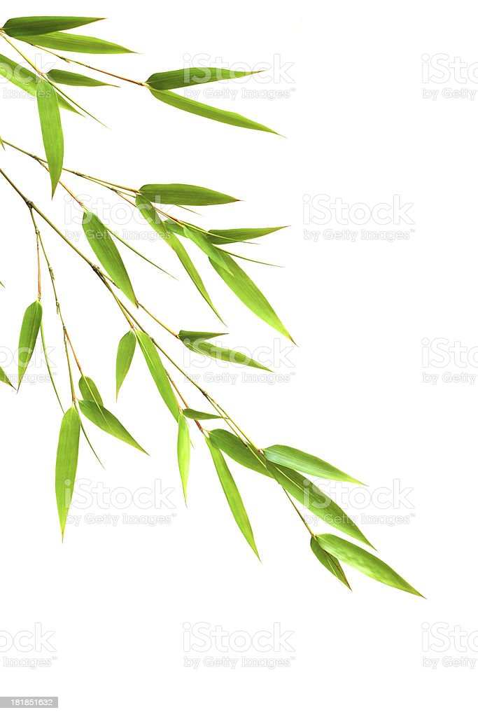 Bamboo leaves stock photo
