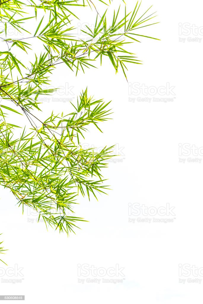 Bamboo leaves. stock photo
