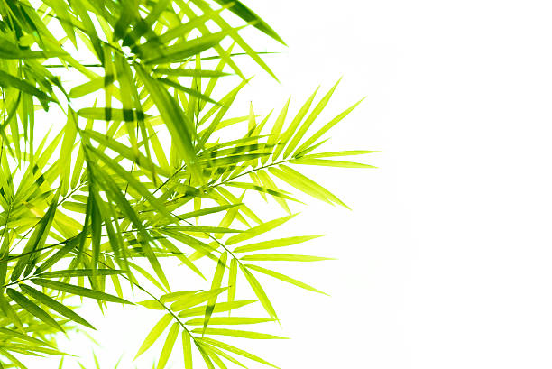 bamboo leaves - bamboo stock photos and pictures