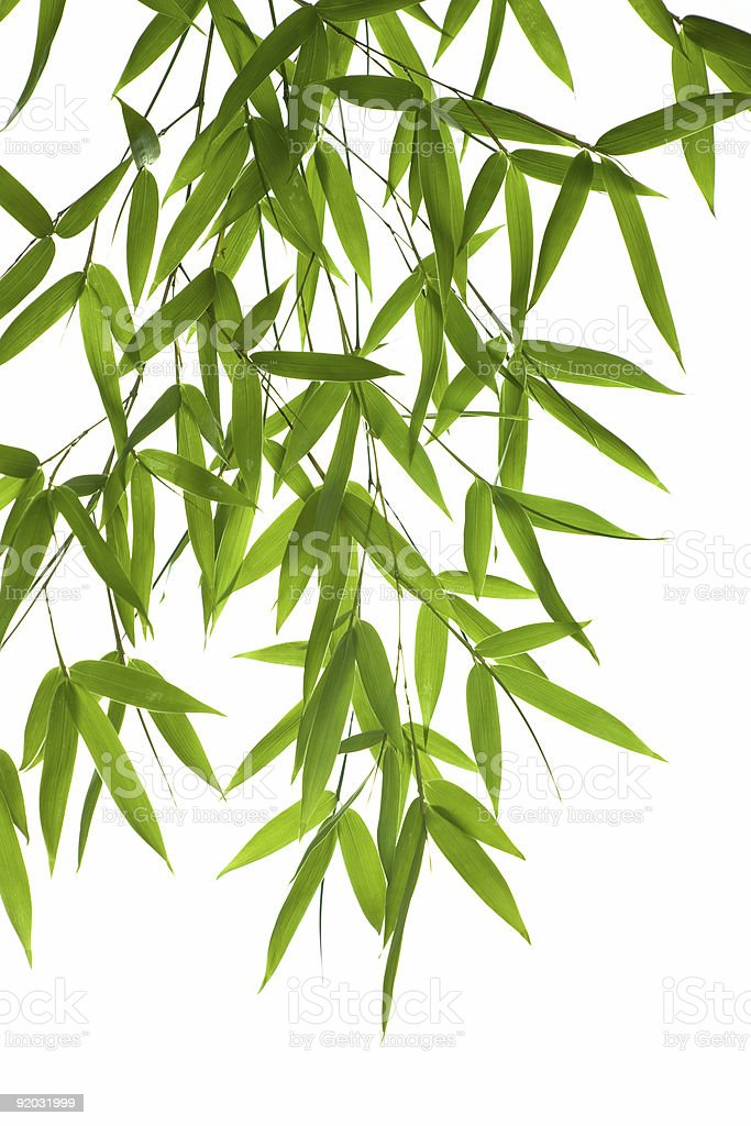 bamboo- leaves royalty-free stock photo