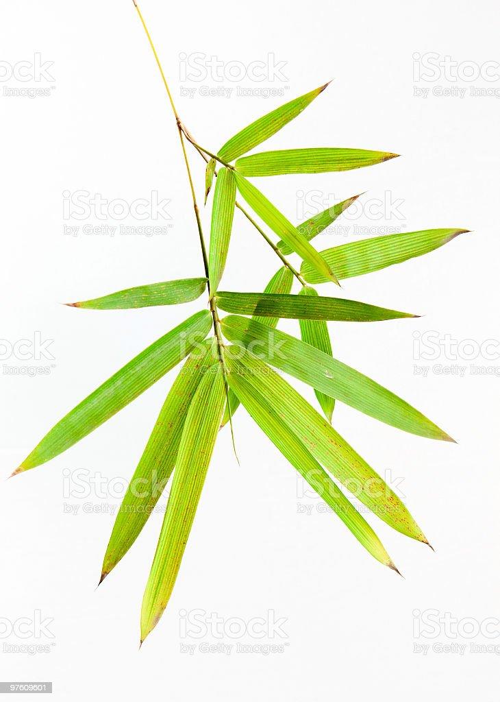 bamboo leaves royaltyfri bildbanksbilder
