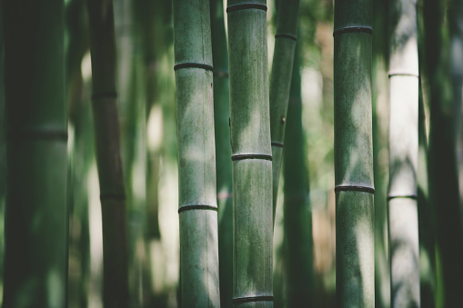 bamboo forest light and shadow background.