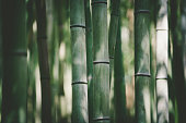 istock bamboo light and shadow background 1273119363