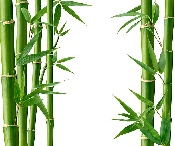 bamboo living - bamboo stock photos and pictures