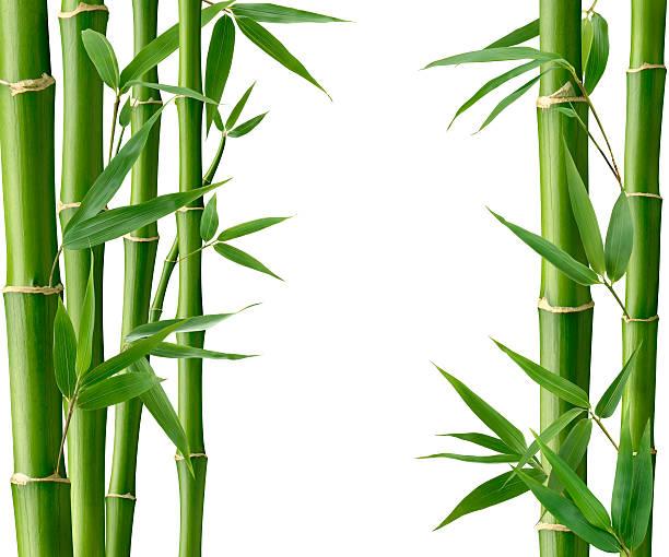 Bambú sala de estar - foto de stock