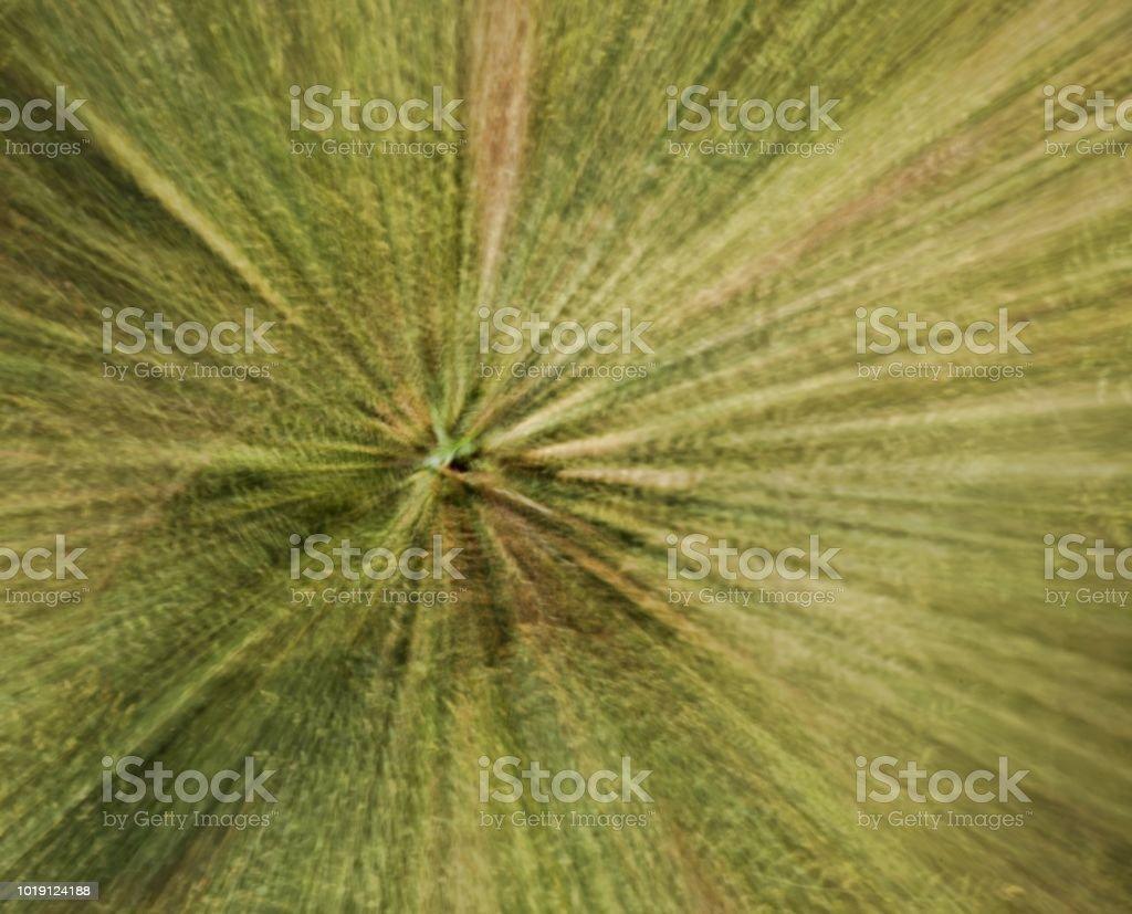 Bamboo Matrix stock photo