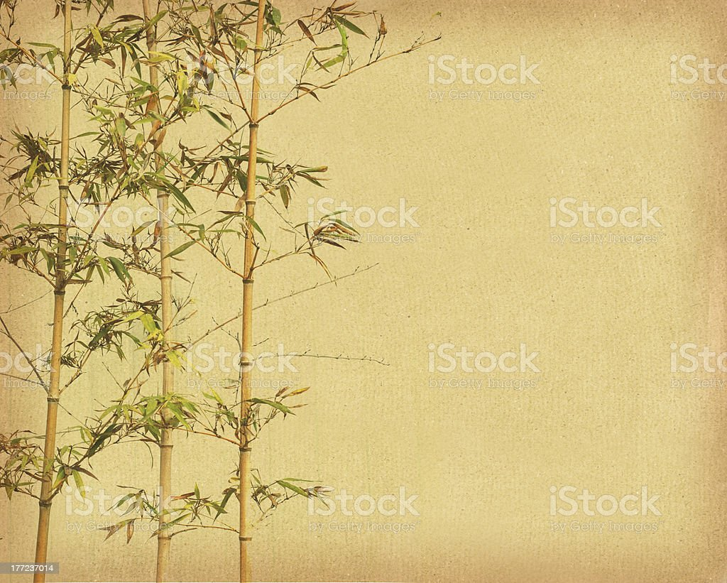 bamboo on old grunge paper texture background royalty-free stock photo