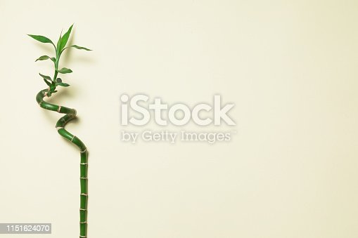 Bamboo on white background top view mockup