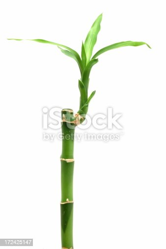 Bamboo - isolated on white