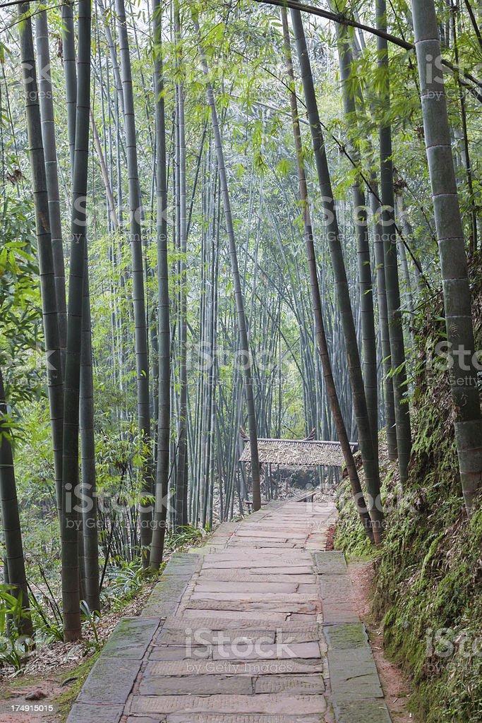 Bamboo Path royalty-free stock photo