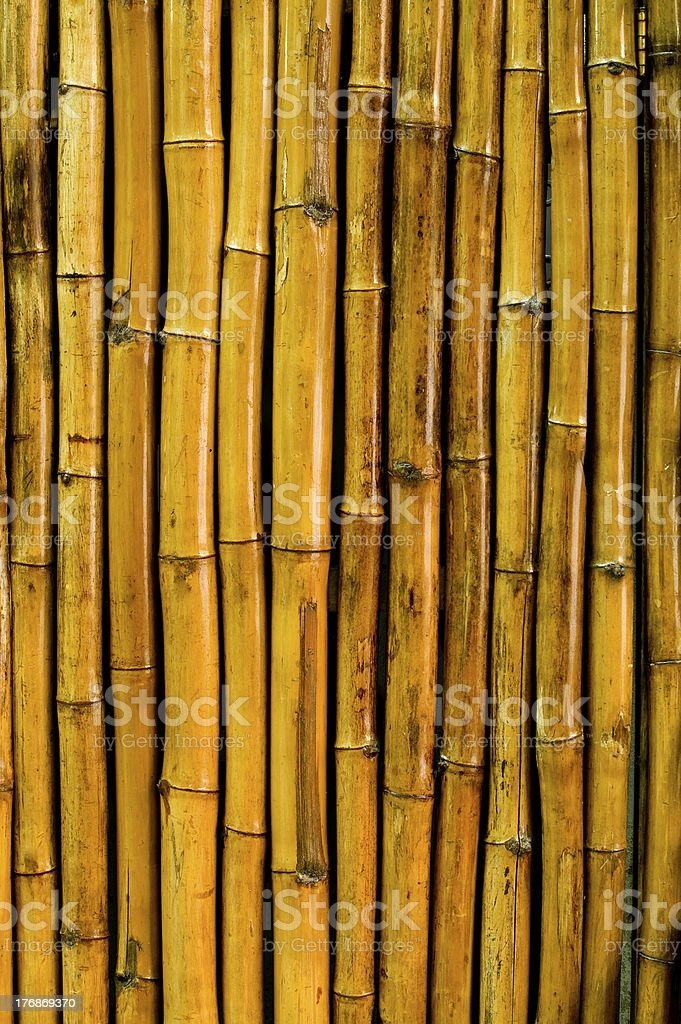 Bamboo Pattern royalty-free stock photo