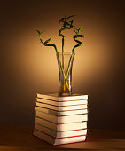 bamboo shoots on a pile of books