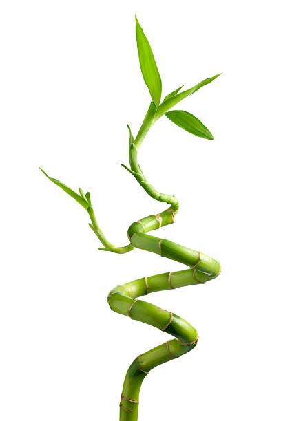 En bambou - Photo