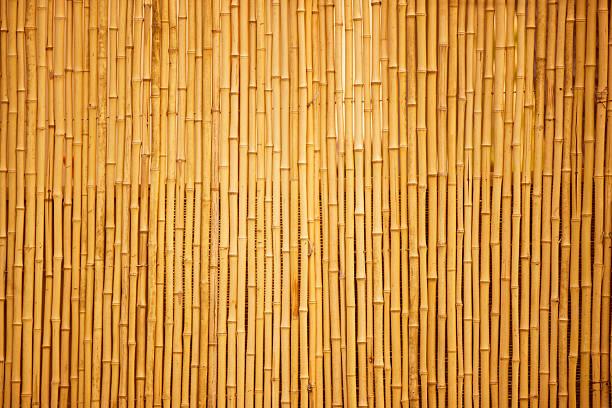 Bambú - foto de stock