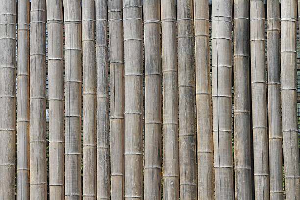 Bamboo cup – Foto