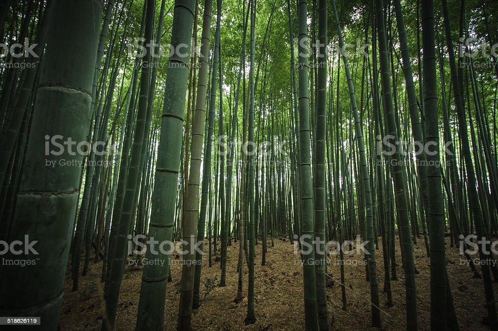 Il bambù - foto stock