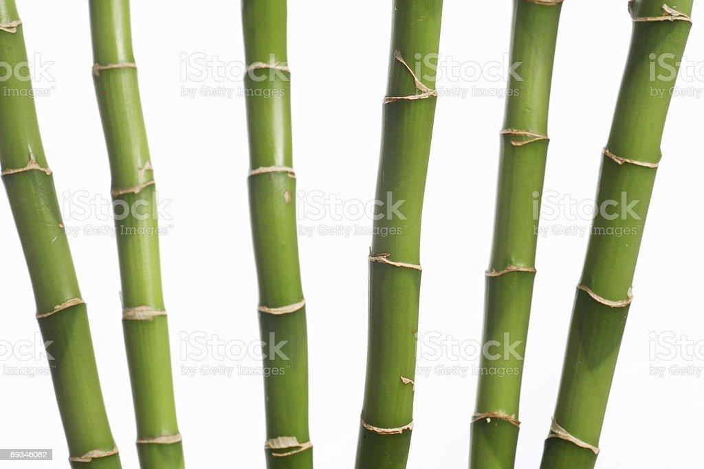 bamboo stock photo