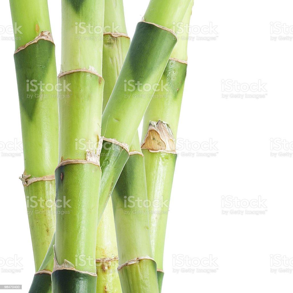 대나무 royalty-free 스톡 사진