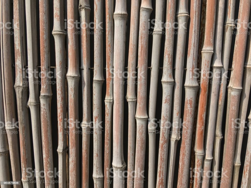 Bamboo plant fence royalty-free stock photo
