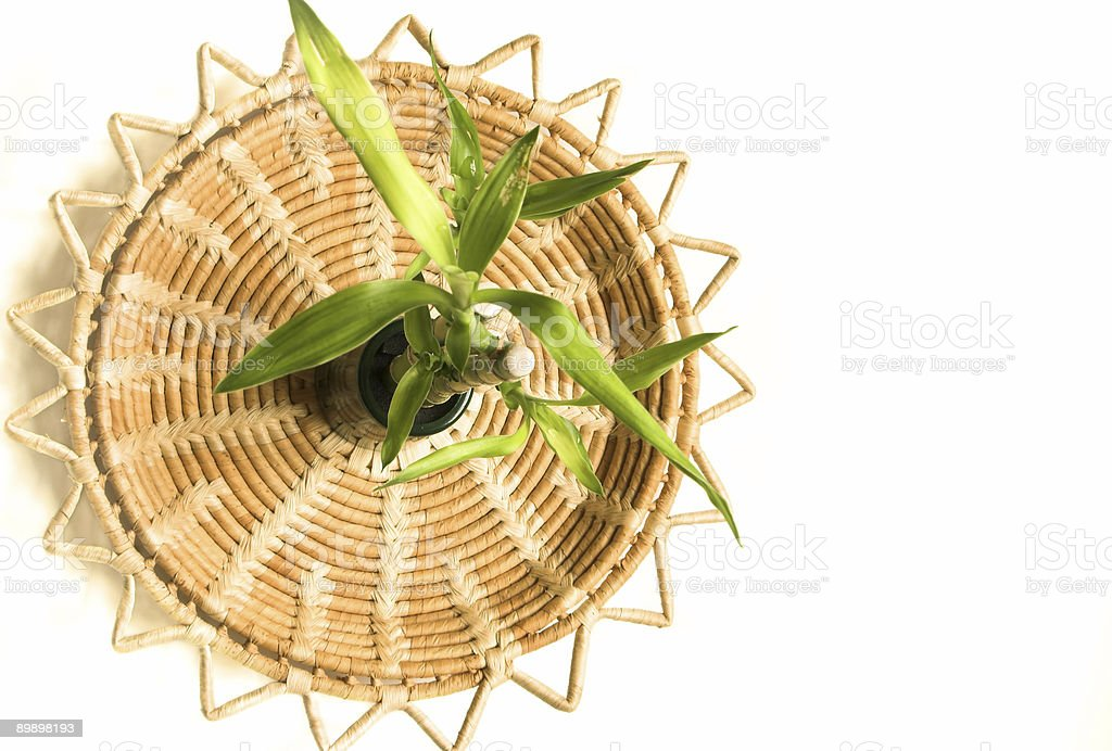 Bamboo plant on a natural circular tray background royalty free stockfoto
