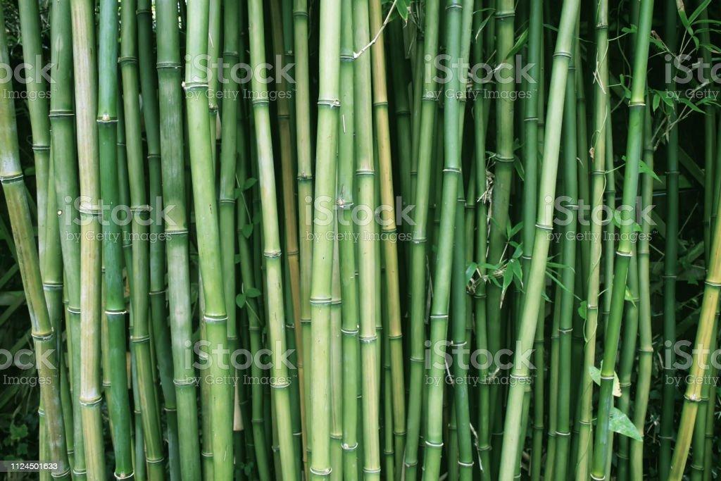 Bambus-Pflanzen in einem Zengarten – Foto