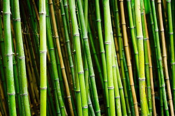Bamboo plants in garden圖像檔