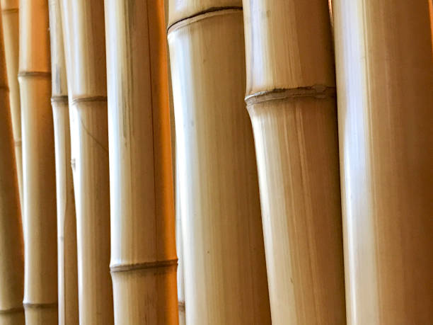 bamboo poles perspective background stock photo