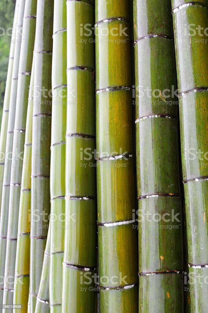 Bamboo Raw Materials royalty-free stock photo