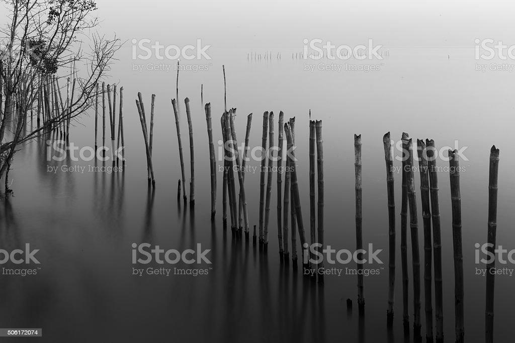 Bamboo reflection stock photo