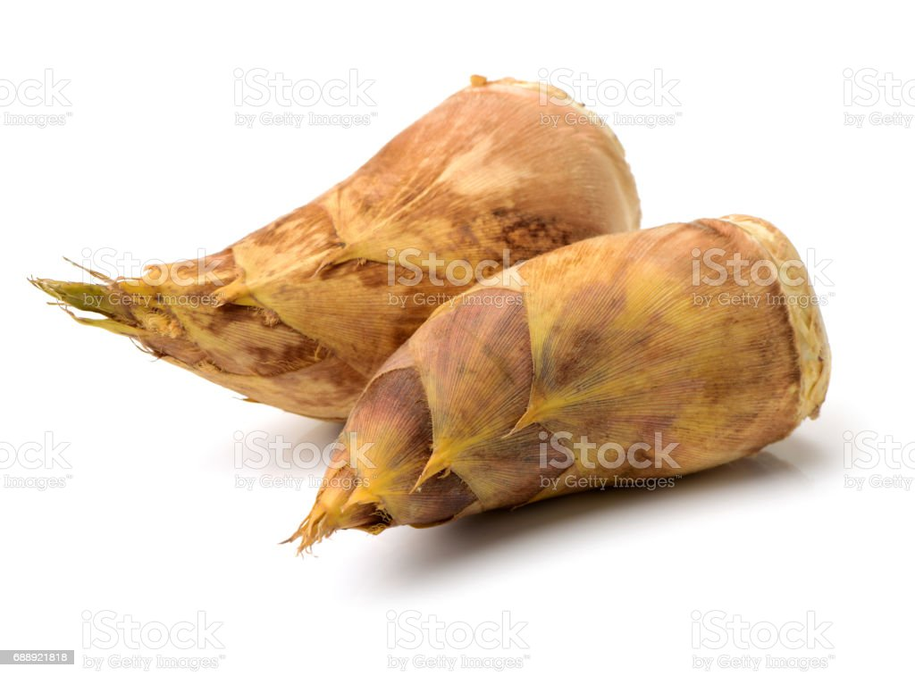 Bamboo shoots   on white background stock photo