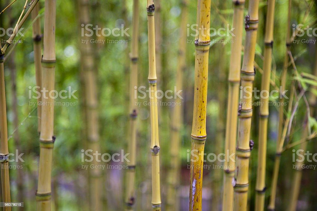 Bamboo shoots royalty-free stock photo
