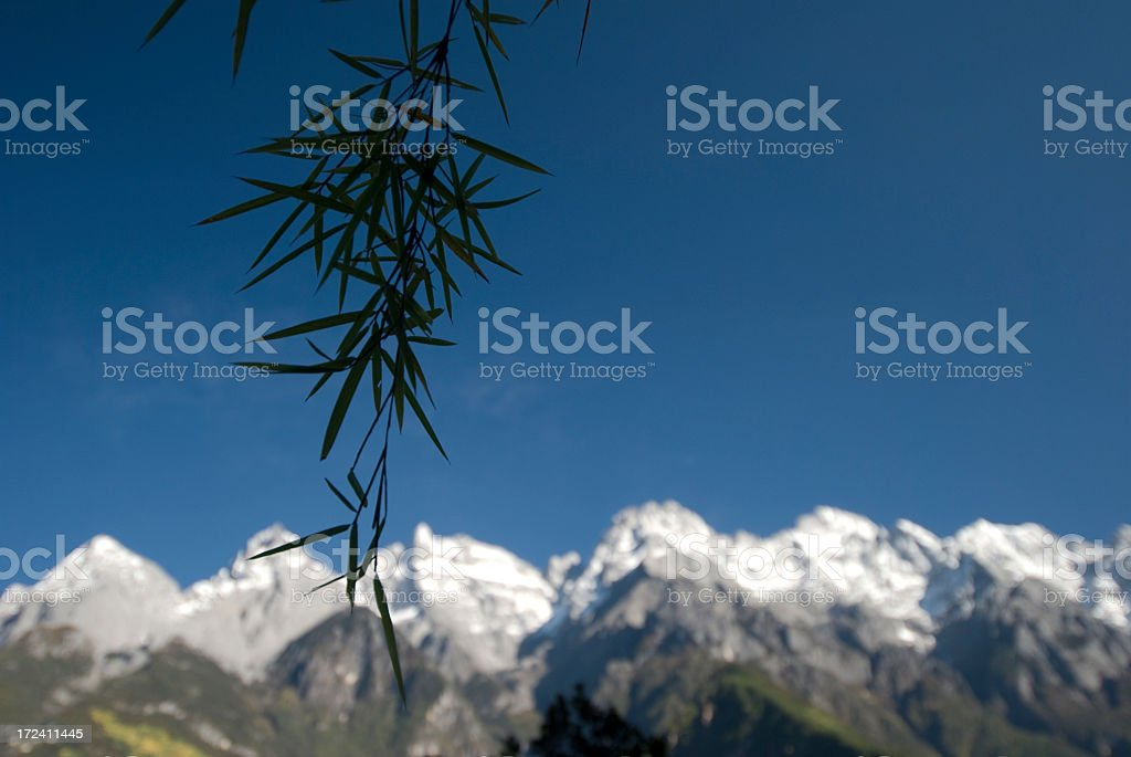 Bamboo Silhouette royalty-free stock photo