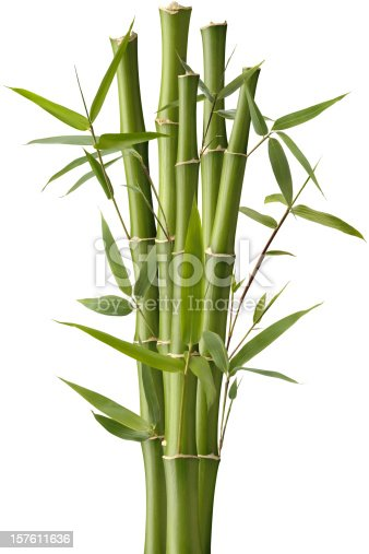 Five green bamboo shoots with leaves, isolated on a white background.
