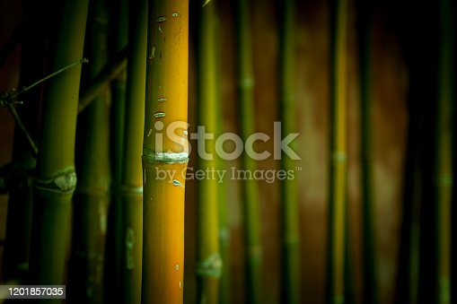 Moody,Close up of one Bamboo stalk , others in background are out of focus.The bamboo plant is also used in paper-making and weaving. Bamboo is found in tropical and subtropical areas, most commonly in Asia.