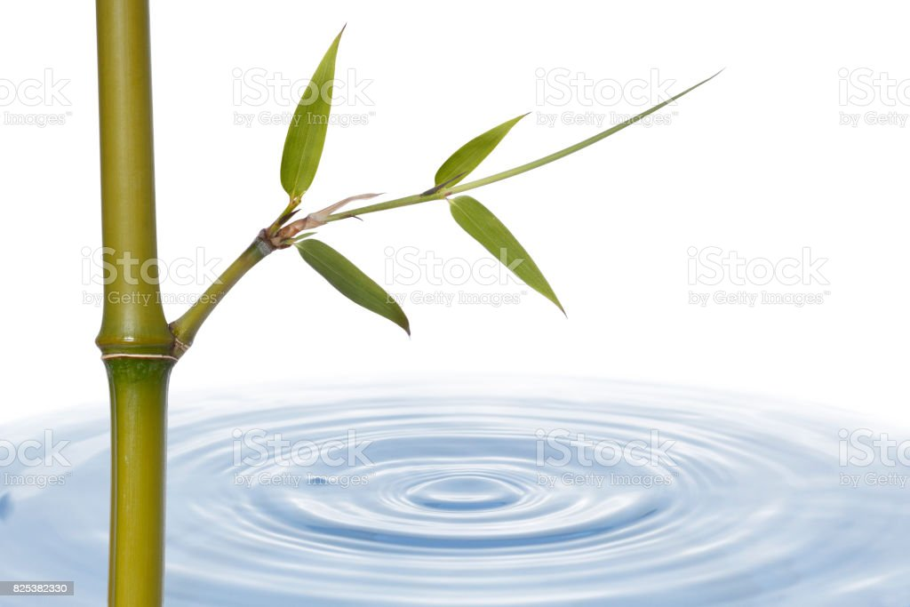 Bamboo Stalk With Leaves And Water stock photo