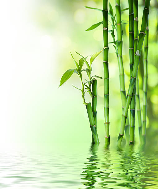 bamboo stalks on water圖像檔