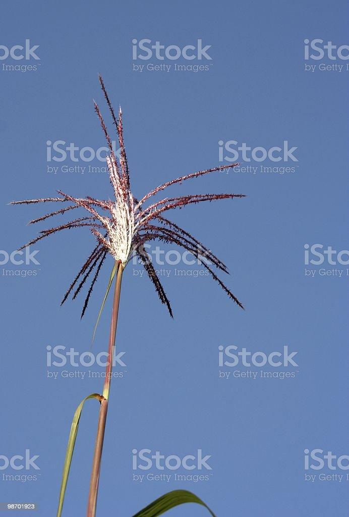 Bastone di bambù foto stock royalty-free