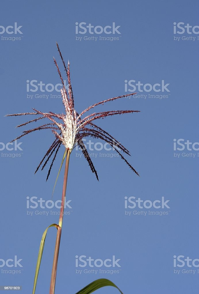 Bamboo Stick royalty-free stock photo