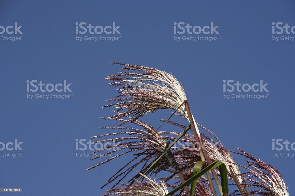 Bamboo Sticks royalty-free stock photo