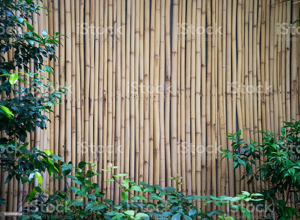 Bamboo Texture stock photo