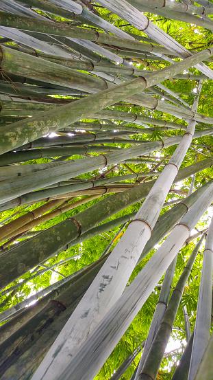 Bamboo tree - Bamboo feet