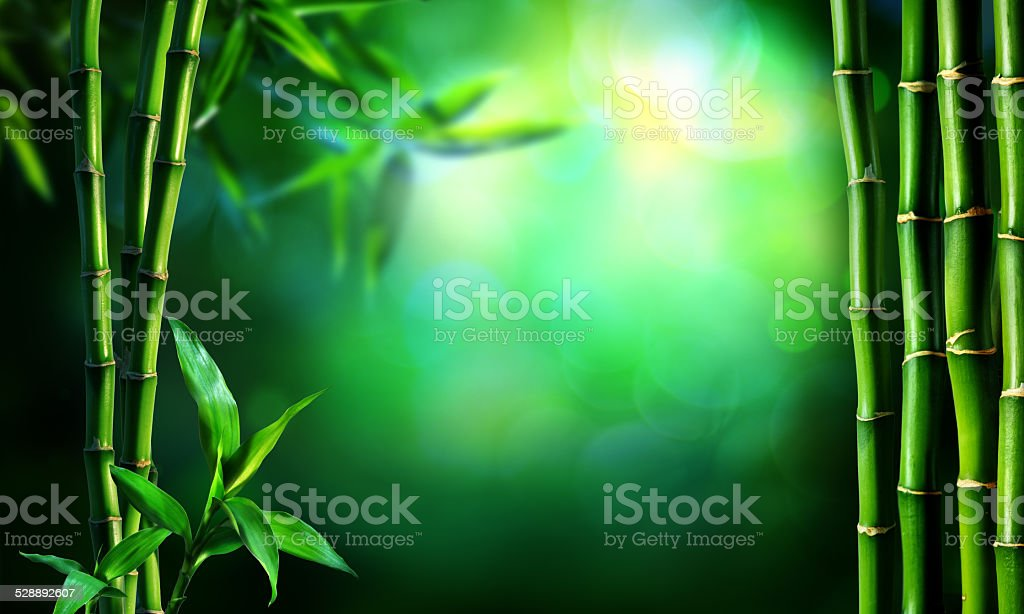 bamboo tree in forest stock photo