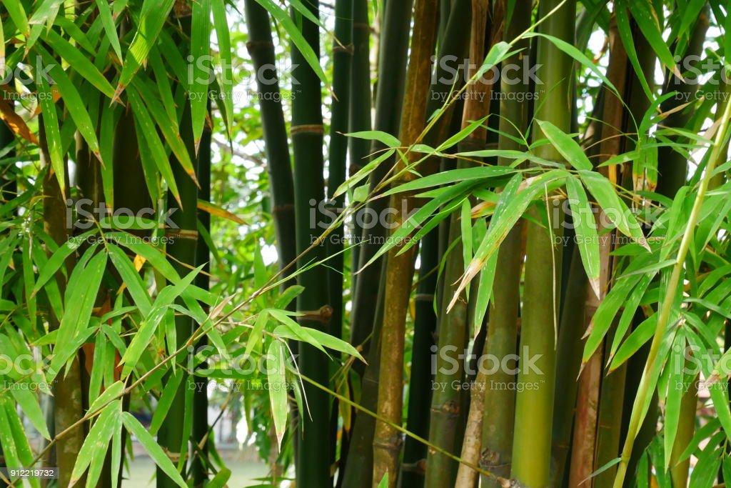 Bamboo tree stock photo