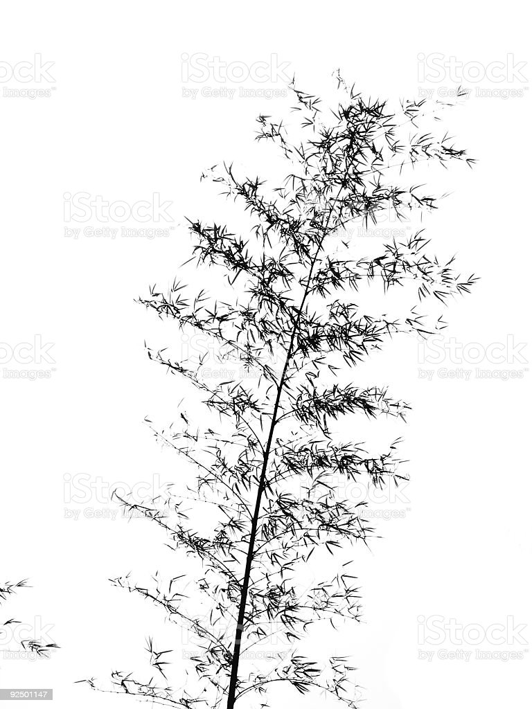 Bamboo Tree Swaying in the Breeze royalty-free stock photo