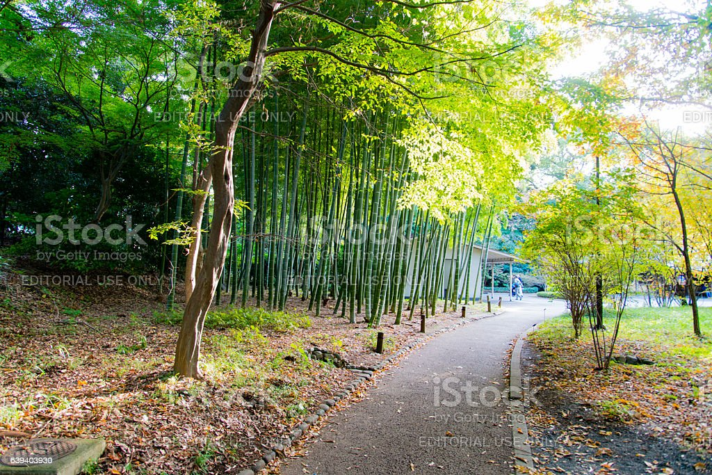 Bamboo trees at Imperial Palace East Garden, Tokyo stock photo
