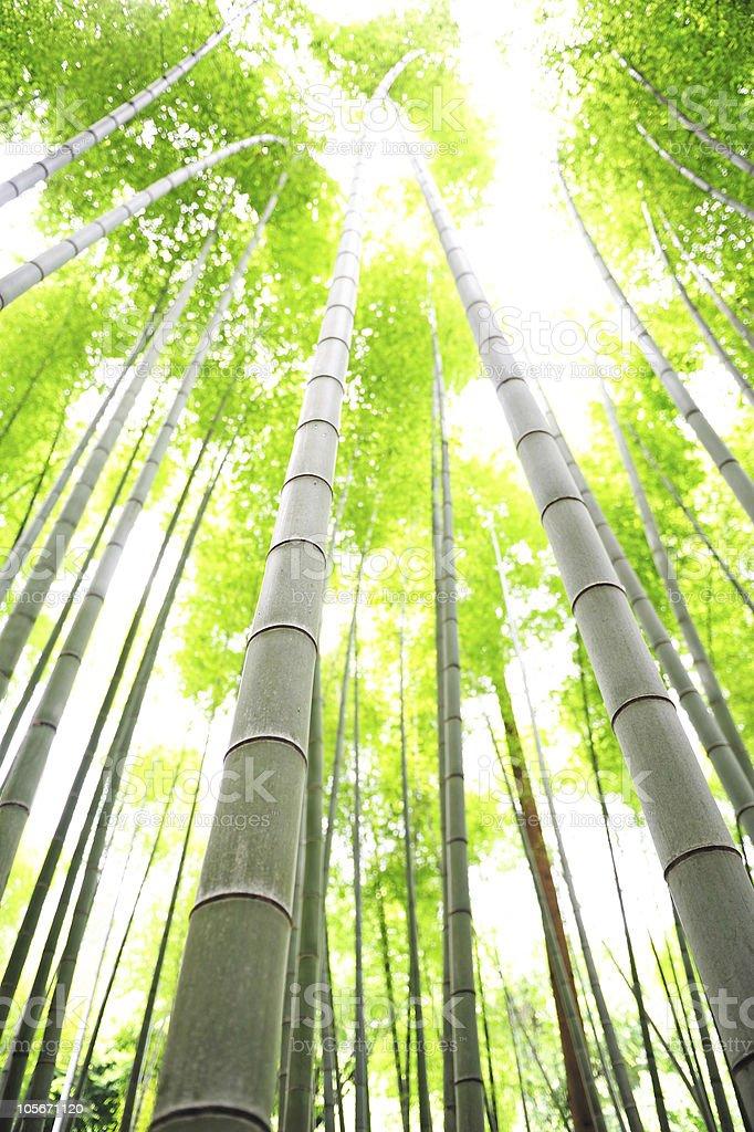 bamboo trees royalty-free stock photo