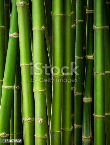 Bamboo trunk in the row for natural background