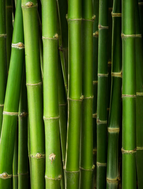 Bamboo trunk background Bamboo trunk in the row for natural background bamboo material stock pictures, royalty-free photos & images