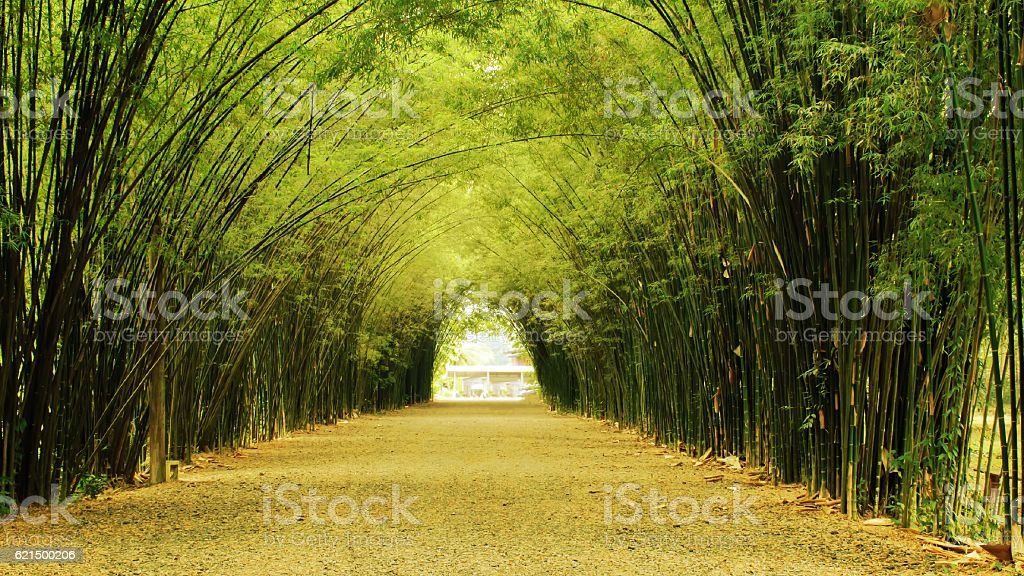 bamboo tunnel with shadow light Lizenzfreies stock-foto