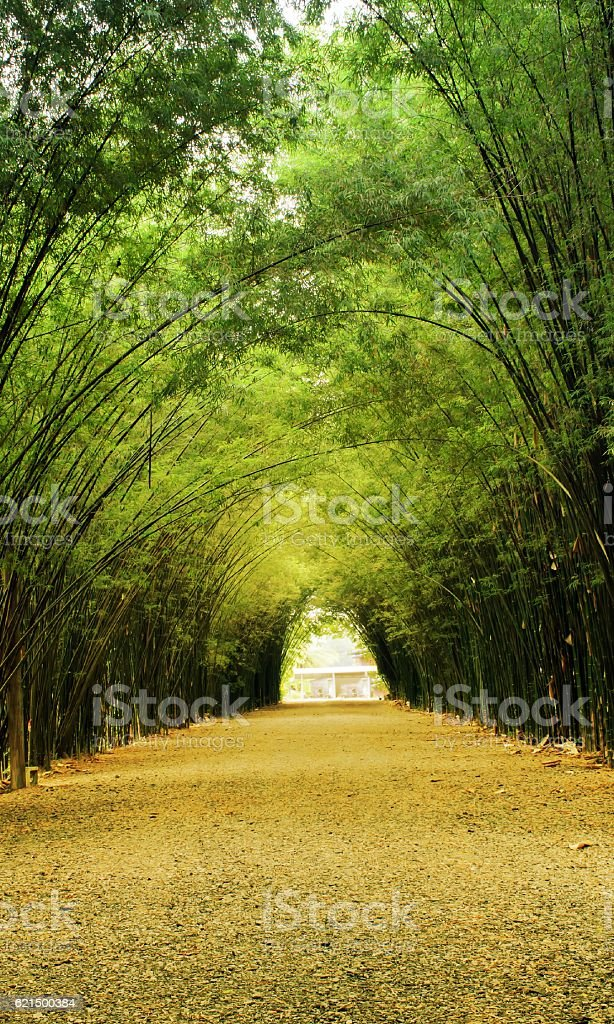 bamboo tunnel with shadow light photo libre de droits